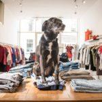 013 Straatjes - Superfly hondje Sushi - Dwaalgebied Tilburg - Foto door William van der Voort